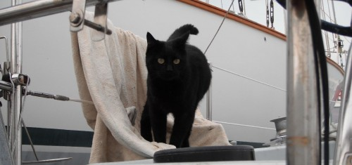 Cat-portugal