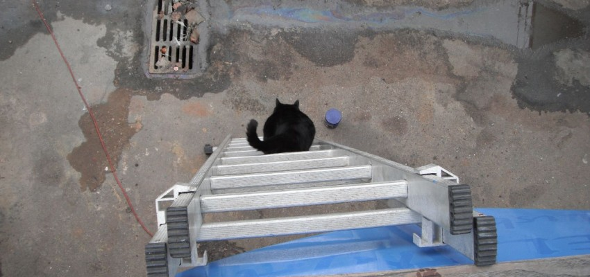 Cat-portugal-ladder